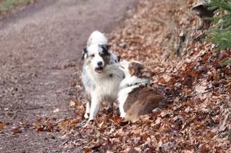 Als Rudelchef steht es Milo zu, Cooper zu maßregeln. Cooper setzt sich zur Beschwichtigung ab und Milo lässt es damit bewenden.