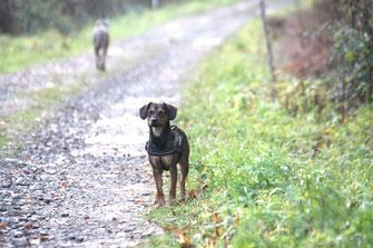 Mara ist es beim Anblick der vielen unbekannten Artgenossen nicht wohl in ihrer Haut und zieht es vor, ihre Bewegungen für´s Erste mal lieber auf Null zu fahren
