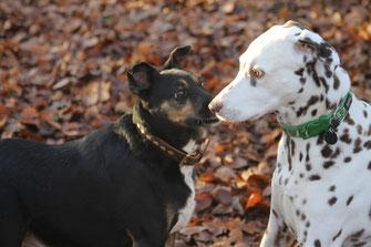 Obwohldie beiden sich gut und lange kennen, beschwichtigen Jacky und Sally sich gegenseitig mit Erstarren