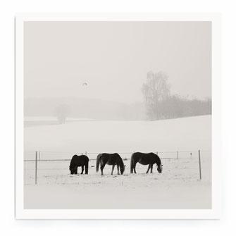 """Diving Swan"" Art Print von Lena Weisbek"