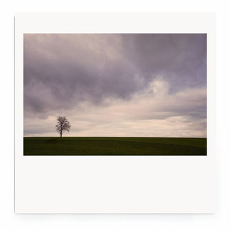 """Lonely Tree"" Art Print von Lena Weisbek"