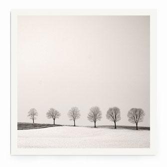"""""""Tree Line"""" Art Print von Lena Weisbek"""