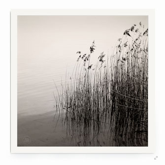 """""""Reed At The Lake"""" Art Print for Sale"""