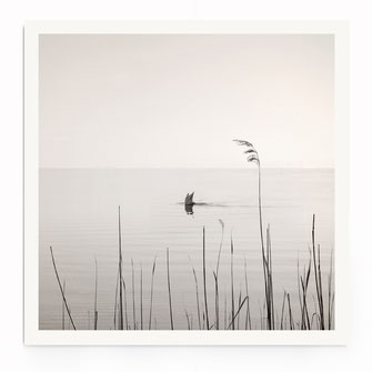 """""""Diving Swan"""" Art Print"""