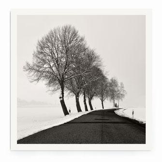 """""""Twin Tree"""" Art Print"""