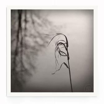 """""""In The Wind"""" Art Print von Lena Weisbek"""