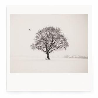 """""""WinterScape"""" Art Print for Sale"""