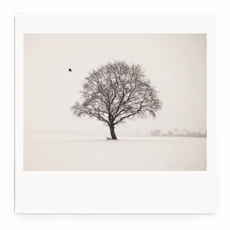 """WinterScape"" Art Print for Sale"