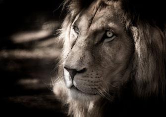 Löwe bester Freund von Ritter Iwein