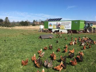 Freilandeier, Eier, Bauernhof, Hofladen, Hofladen Holweg, Hof Holweg, Hühner, Hühnermobil, Hofladen, Hameln, Coppenbrügge, regional, direkt vom Bauern