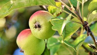 Ist Fructose (Fruchtzucker) ungesund? - Vegansports