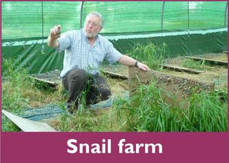 Snail farm lannecaube (vic-bilh / Madiran)