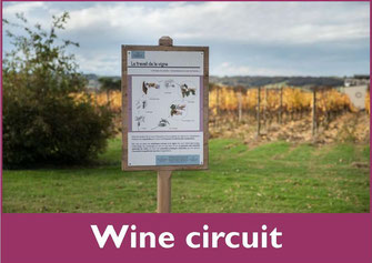 Wine circuit at the castle of Crouseilles (Vic-Bilh / Madiran)