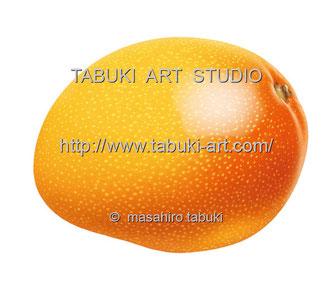 RD1271 アップルマンゴー mango トロピカルフルーツ 果物