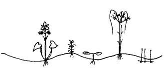 図4.湿性裸地の図