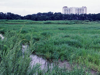 図8.低茎草原への遷移 1992年の様子の画像