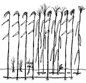 図6.高茎草原の図