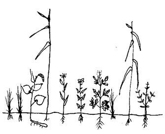 図5.低茎草原の図