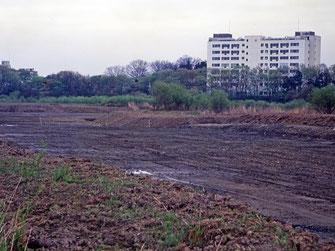 図7.掘削後の湿性裸地 1990年