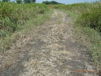 図8.台風で冠水した後の小道の画像