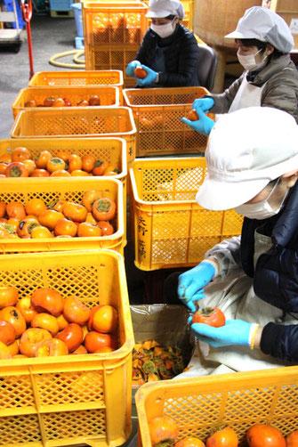 柿酢の原料の柿のヘタ取り作業
