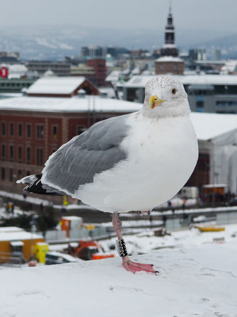 Oslo, Opera House, Seagull, View, Rooftop