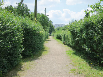 Öffentliche grüne Wege
