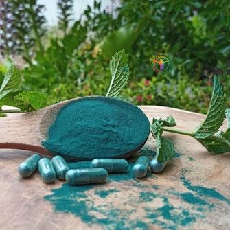 creme synerskin alpha  synerj algue