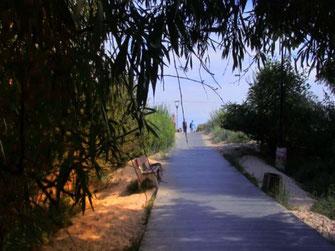 """Dieses Foto zeigt einen Zugang zum Strand des polnischen Kurorts Swinemünde. Der Weg ist mit Holzplatten ausgelegt. Rechts und links befindet sich natürliches Grün. Das Bild erinnert an den Titel """"Under the boardwalk"""" der Rolling Stones."""