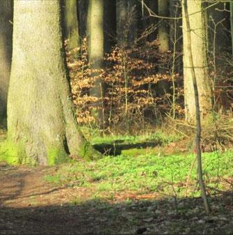 Dieses Foto zeigt den Teil eines Waldes, der von der aufgehenden Sonne beschienen wird.
