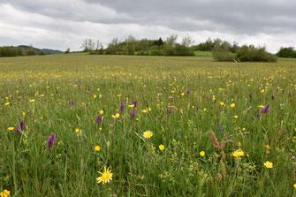 Vielfältige Blühwiesen mit Orchideen, K.Hausmann