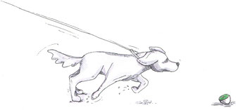Leinenführigkeit - Kiwi-die-Hundeschule