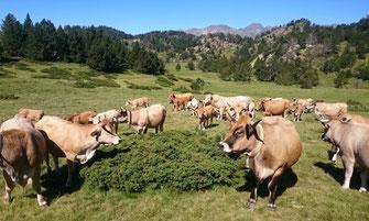 Gaec de Bergnes - Campagne sur Aude