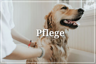 Pflege Hundepflege