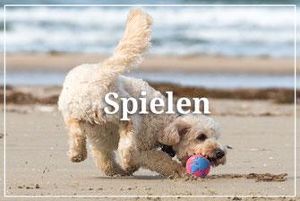 Hundestrand besonderes für vier Pfoten Spielen