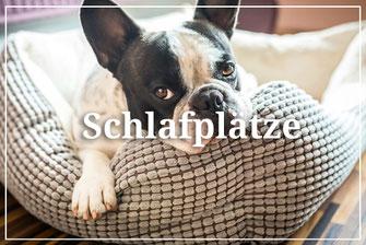 Hundestrand besonderes für vier Pfoten Schlafplätze