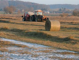 Mahd durch Landwirte im Ampermoos (Foto: LBV)
