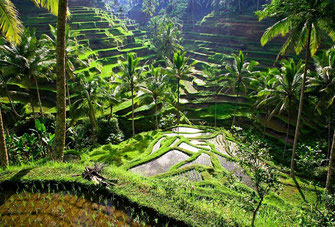 Ubud short term, holiday villas for rent by owner direct.