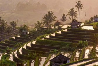 Tabanan Commercial villas on offer for sale, South Bali.