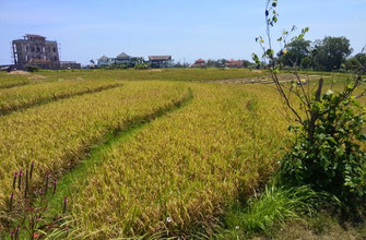 Land for sale Canggu, Cemagi, South Bali.