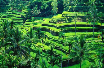 Land for sale in Bali.
