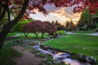 Torino fotografie dei parchi il verde e il Valentino
