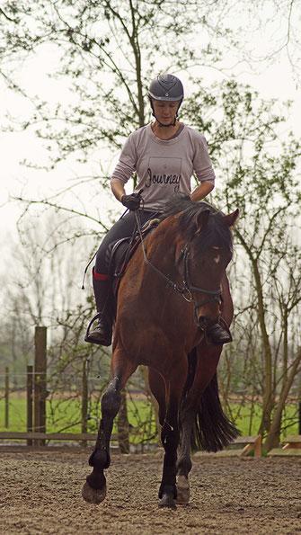 Ausbildung Pferde Beritt Reitlehrer Turniere Korrektur Problempferde Wera Grommes TOS Dr. Grommes
