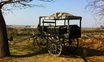 hippomobile-ceremonie-ancienne-cercueil-lyonnais