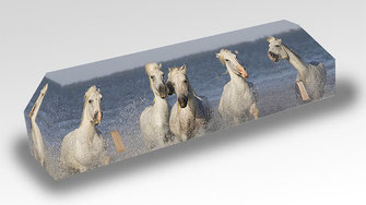cercueil-en-carton-ab-cremation-brigitte-sabatier-chevaux-de-camargue
