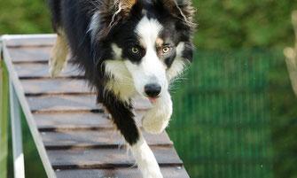 Urlaub mit Hund in Dorum - Hundespielplatz