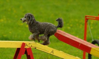 Urlaub mit Hund in Dorum - Hundetraining