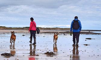Urlaub mit Hund - Nordsee, Dorum, Ferienhaus