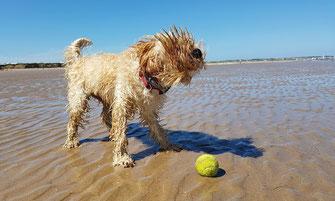 Urlaub mit Hund in Dorum - Hundestrand