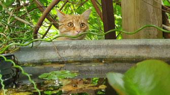 Barf Plan-Check Katze